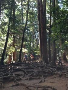 鞍馬 木の根道