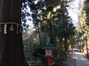 高尾山 1号路