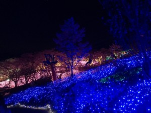 さがみ湖夜桜イルミネーション