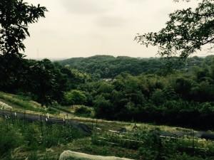 小野路城近くの風景