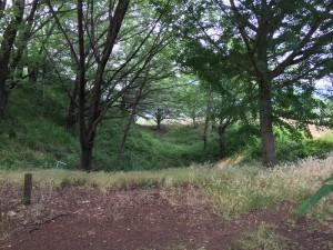 甲斐の小山城の堀