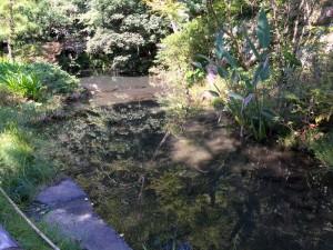 深大寺の池