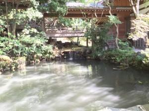 深大寺の本堂脇池