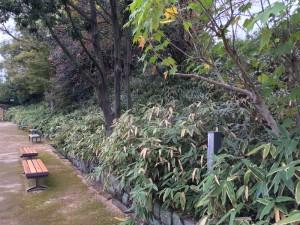 姫路城の土塁