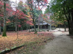 円教寺の紅葉