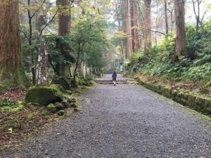 大雄山最乗寺の参道