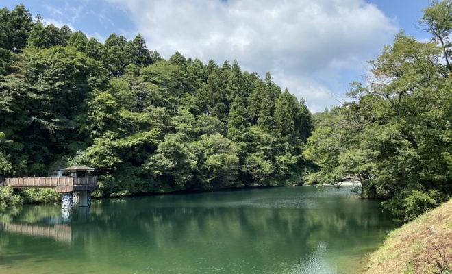 八重桐の池