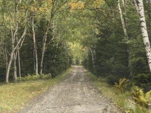池の湯林道