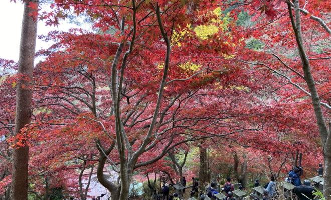 大山寺の紅葉 (神奈川県)
