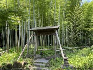 鎌倉・英勝寺の竹林
