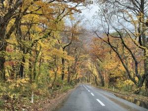十和田湖の道路
