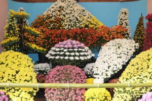 笠間稲荷の菊まつり