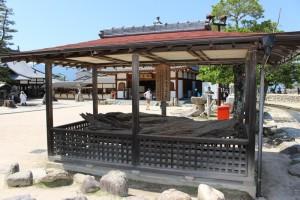 大願寺の御神木
