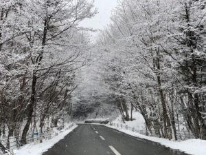 田沢湖の道路の樹氷