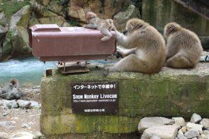 猿の?インターネット中継