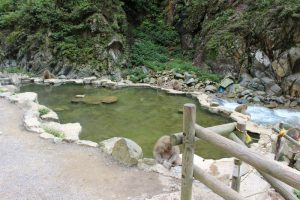 地獄谷温泉のニホンザル