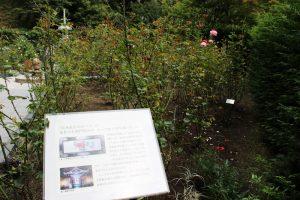 白華峰西洋の庭