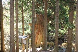 矢立ての杉