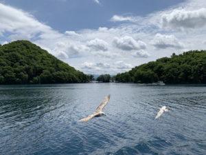 洞爺湖のカモメ