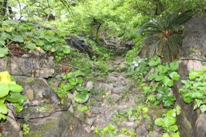 今帰仁城の旧道