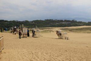 鳥取砂丘のラクダ
