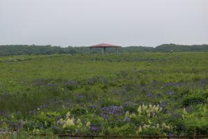 北方原生花園