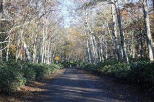 知床公園線