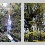 払沢の滝 広徳寺